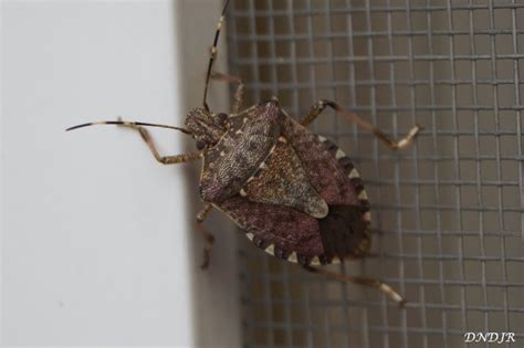 Insects of Germany - www